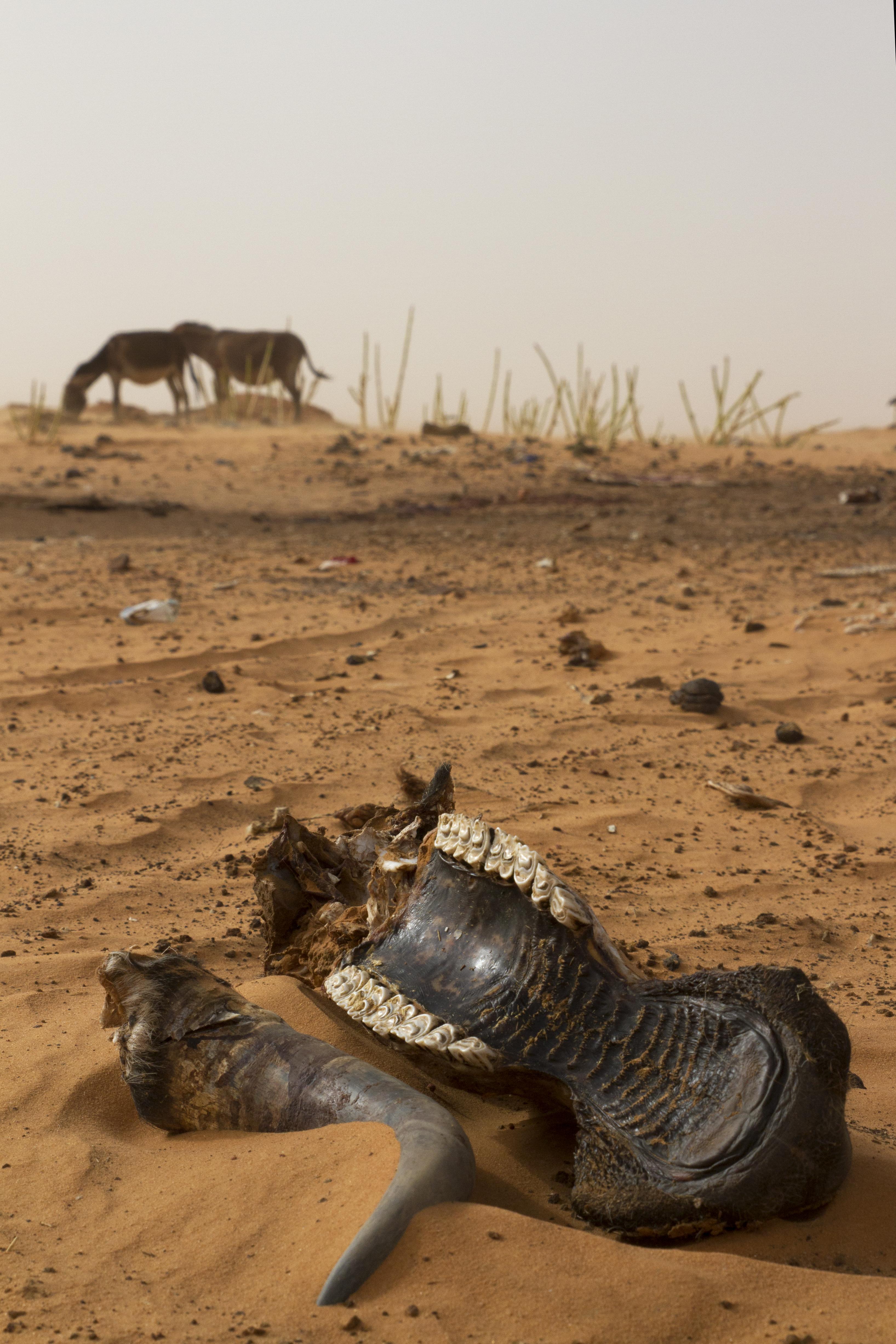 IOM Mauritania - Desert